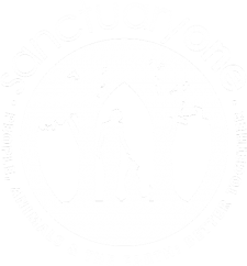 SanctuaryOne / a little creative